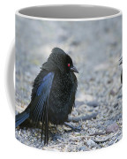 Bronzed Cowbird Display Coffee Mug