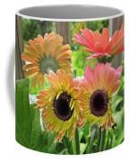 Brown Eyed Gerbera Daisies Coffee Mug