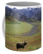 Brown Grizzly Bear In Denali National Coffee Mug