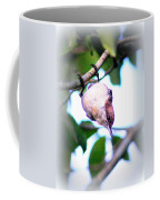 Brown-headed Nuthatch 9173-006 Coffee Mug