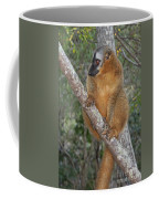 brown Maki Madagascar 1 Coffee Mug