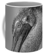 Brown Pelican In Black And White Coffee Mug