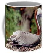 Brown Pelican Incubating Eggs Coffee Mug