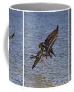 Brown Pelican - Triptych Coffee Mug