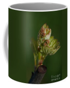 Bud-break 2 Coffee Mug