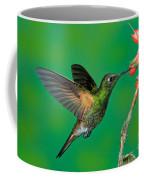 Buff-tailed Coronet Coffee Mug