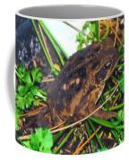 Bufo Toad Coffee Mug