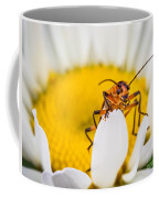Bug On A Daisy Coffee Mug