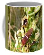 Bug On Stalk Of The Wooly Mullein Coffee Mug