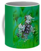 Bug On Wild Mint On Great Glacier Trail In Glacier National Park-british Columbia  Coffee Mug