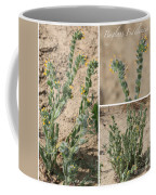 Bugloss Fiddleneck Collage Coffee Mug