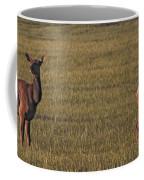 Bull Elk In Velvet With Cow   #5304 Coffee Mug