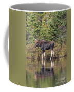 Bull Moose 3 Coffee Mug