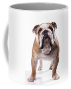 Bulldog Standing, Facing Camera Coffee Mug