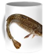 Burbot Lota Lota Isolated On White Coffee Mug