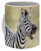 Burchells Zebra Equus Quagga Burchellii Coffee Mug