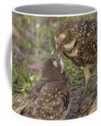 Burrowing Owl Feeding It's Chick Photo Coffee Mug