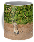 Burrowing Owl IIi Coffee Mug
