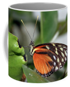 Key West Butterfly 2 Coffee Mug