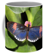 Key West Butterfly 3 Coffee Mug