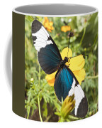 Butterfly Sara Longwing Coffee Mug