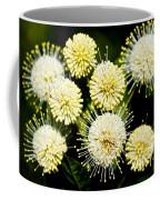 Buttonbush Coffee Mug