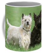 Cairn Terrier And Scottish Terrier Coffee Mug