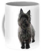 Cairn Terrier Dog Coffee Mug