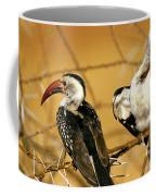 Calao A Bec Rouge Tockus Erythrorhynchus Coffee Mug