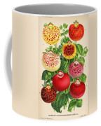 Calceolaria From A Vintage Belgian Book Of Flora. Coffee Mug
