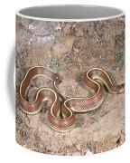 California Kingsnake Coffee Mug