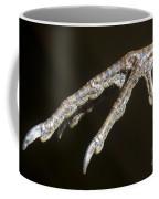 California Quail Foot Coffee Mug