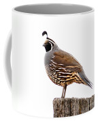 California Quail Coffee Mug by Robert Bales