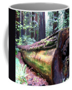 California Redwoods 2 Coffee Mug