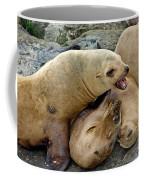 California Sea Lions Coffee Mug