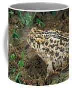 California Toad Bufo Boreas Halophilus Coffee Mug