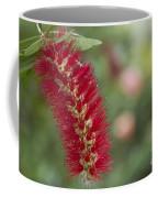 Callistemon Citrinus - Crimson Bottlebrush Coffee Mug