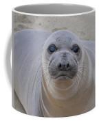 Cambria Baby Seal Coffee Mug