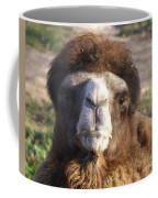 Camel Face Coffee Mug