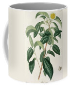 Camellia Thea Coffee Mug by LFJ Hoquart