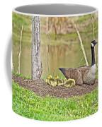 Canada Goose And Goslings Coffee Mug