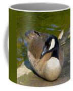 Canada Goose Sitting Pretty Coffee Mug