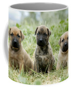 Canary Dog Puppies Coffee Mug