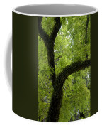 Canopy Of Cedar Elm Coffee Mug