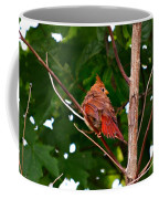 Cardinal Bird Baby Coffee Mug