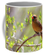 Cardinal In Spring Coffee Mug