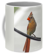 Cardinal Young Female Coffee Mug