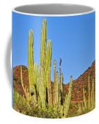 Cardon Cactus In Bahia Kino-sonora-mexico Coffee Mug