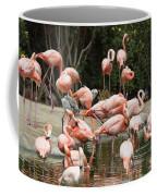 Caribbean Flamingos - Phoenicopterus Ruber Ruber Coffee Mug