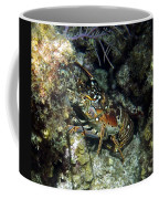 Caribbean Reef Lobster On Night Dive Coffee Mug